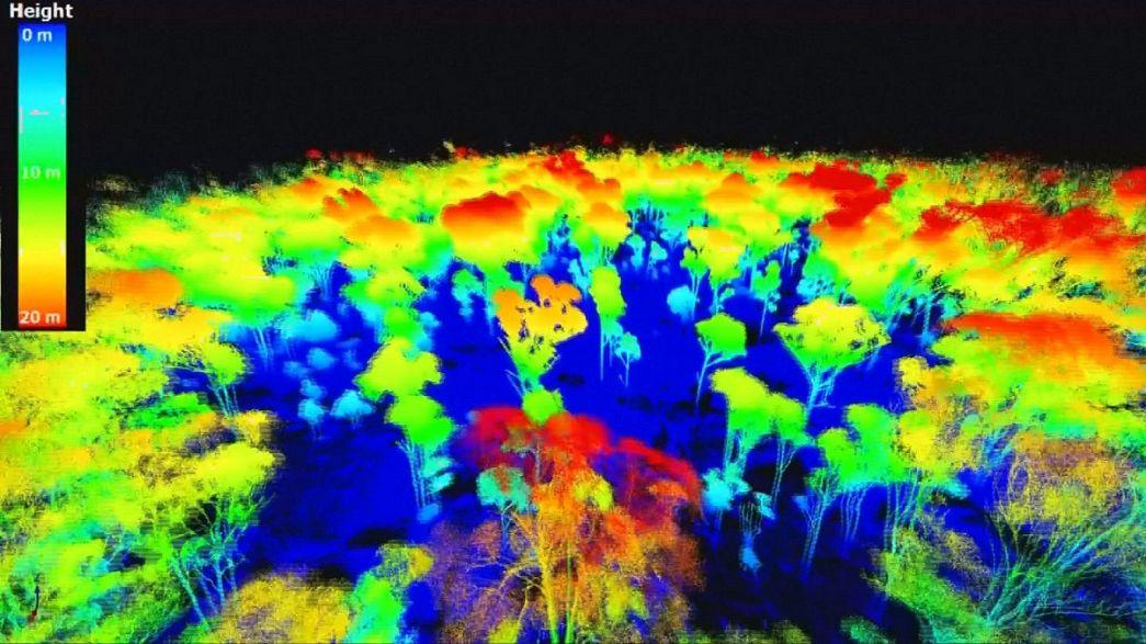 Mapas 3D para medir el dióxido de carbono almacenado en los árboles