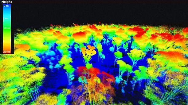 Laser scanning trees