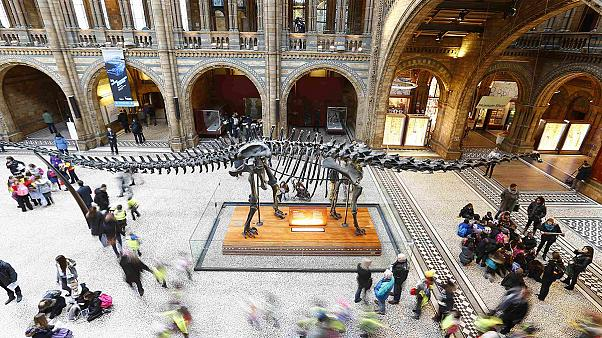 Outcry after London museum retires Dippy the dinosaur