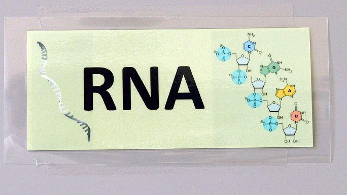 L'ARN, une molécule d'avenir