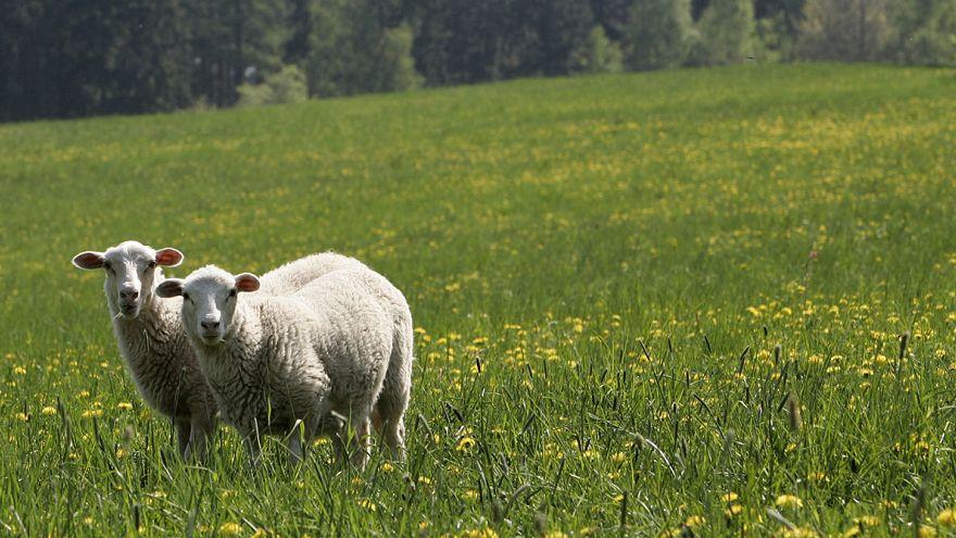Pour mon réseau WiFi, donne-moi un mouton