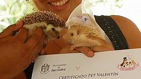Peru: Pets tie the knot on Valentine's day