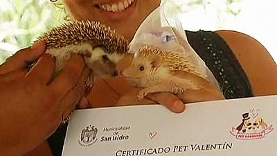Peru: Pets tie the knot on Valentine's day – nocomment