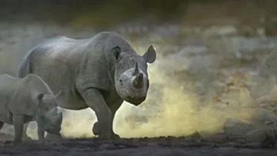 Rhino (Born Free Foundation)
