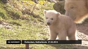 Adorable polar bear cubs enjoy their first trip outside
