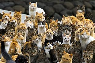 Welcome to Cat Island