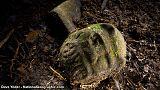 Archäologen entdecken in Honduras unbekannte Zivilisation