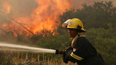 Incendio en el parque nacional surafricano de Montaña de la Mesa