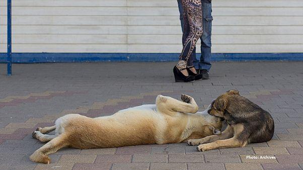Φράνκι... ο σκύλος που κάνει επιτυχημένες διαγνώσεις καρκίνου