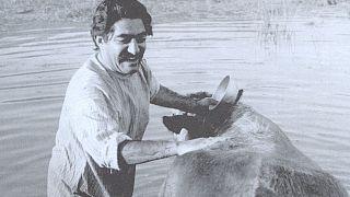 اکران عمومی فیلم گاو بعد از ۴۵ سال