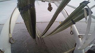 شبكة لازالة النفط المتسرب في البحار