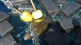 Image: Turtle rescue