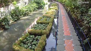 Clean river soon (Shokobutsu)