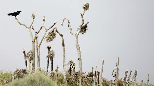 Comment expliquer la sécheresse historique en Californie?