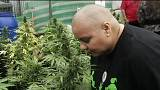 Chile's first legal medical marijuana