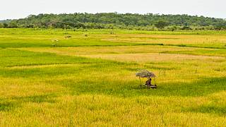 Guiné-Bissau apela a governos da CPLP para reforço de sinergias