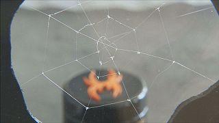 Científicos alemanes crean seda de araña artificial