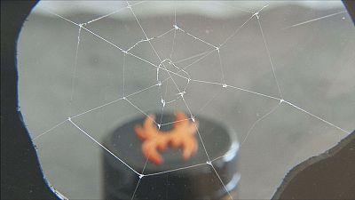 Con un magico filo di ragno
