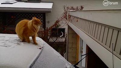The Short-Cut-Cat! (German Stuttering Association)