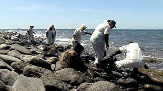 آلودگی بر اثر نشت سوخت کشتی غرق شده روس در جزایر قناری
