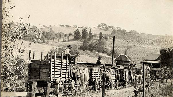 Workers at the historic Fountaingrove Winery owned by Kanaye Nagasawa, one