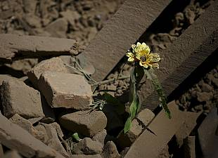Tragic aftermath of Nepal earthquake