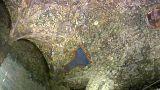 Unvollendeter da Vinci: Mailand zeigt 2013 entdeckte Wandskizze