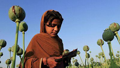 Campo de papoilas no Afeganistão