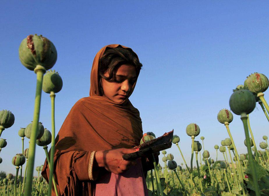 L'Afghanistan et ses champs de pavot