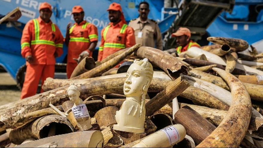 10 tons of confiscated ivory destroyed in Dubai.