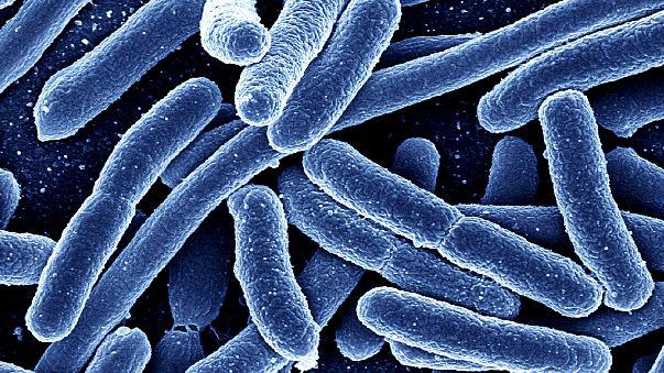 Escherichia coli bacteria magnified 7000 times