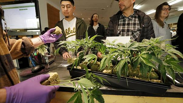 A retail clerk shows cannabis plants to customers at the Harborside cannabis dispensary in Oakland, California, on Jan. 1.