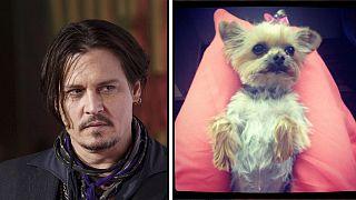 استراليا تمهل الممثل جوني ديب 50 ساعة لإعادة كلبيه إلى كاليفورنيا