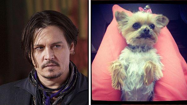 Quais foram as leis australianas infringidas pelos cães de Johnny Depp?