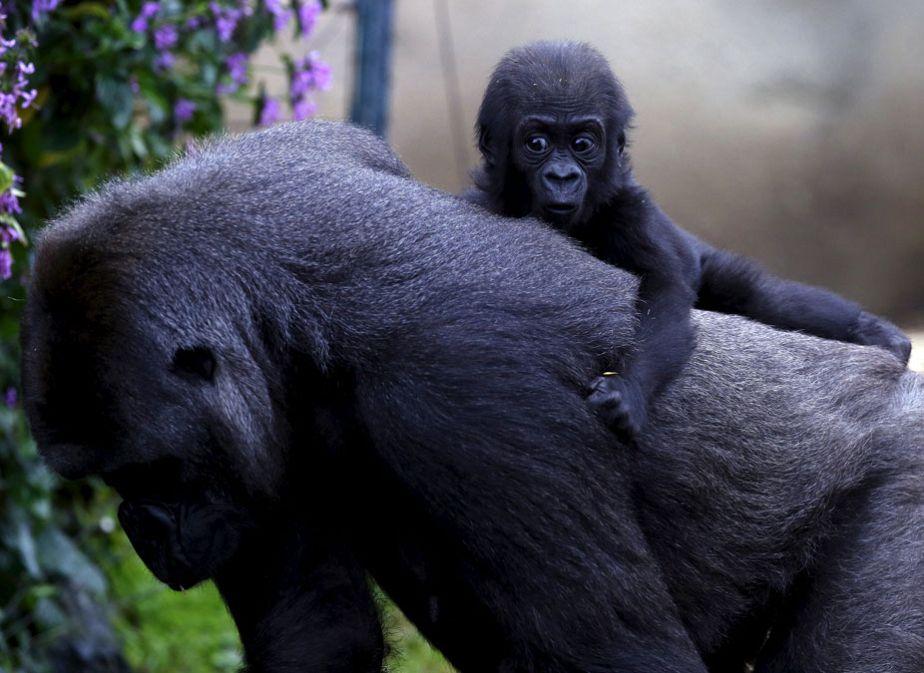 Sur le dos de sa mère