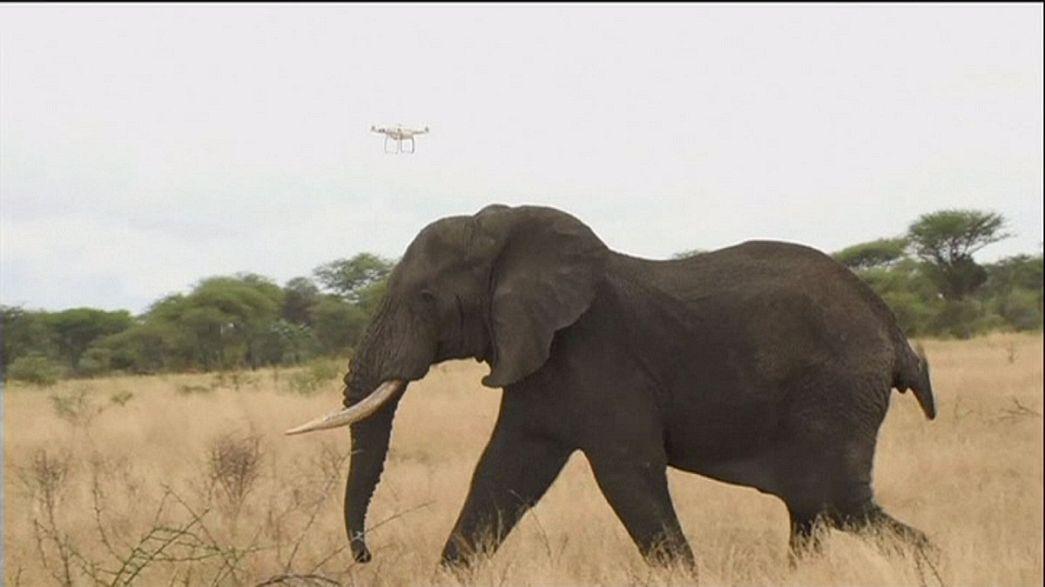 الدرونات من أجل حماية الفيلة