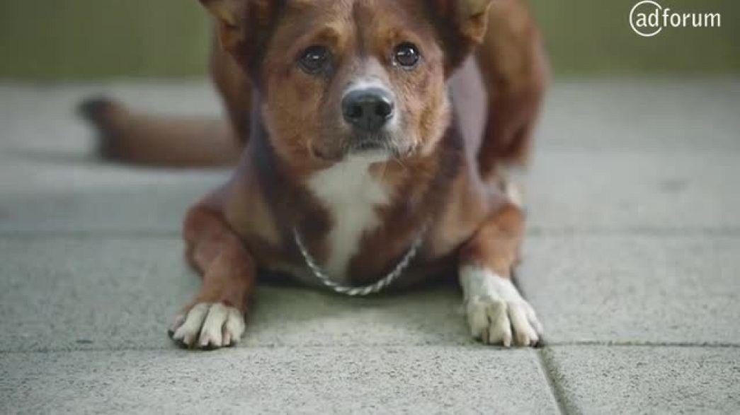 """""""The Man and the Dog"""" :90 (FATH (Fundación Argentina de Transplante Hepático))"""