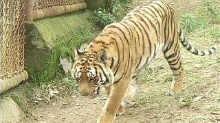 Kranich trifft in Hangzhou auf Tiger