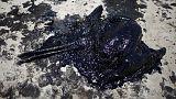 حالة طوارئ في سانتا بربارا بسبب تلوث بيئي