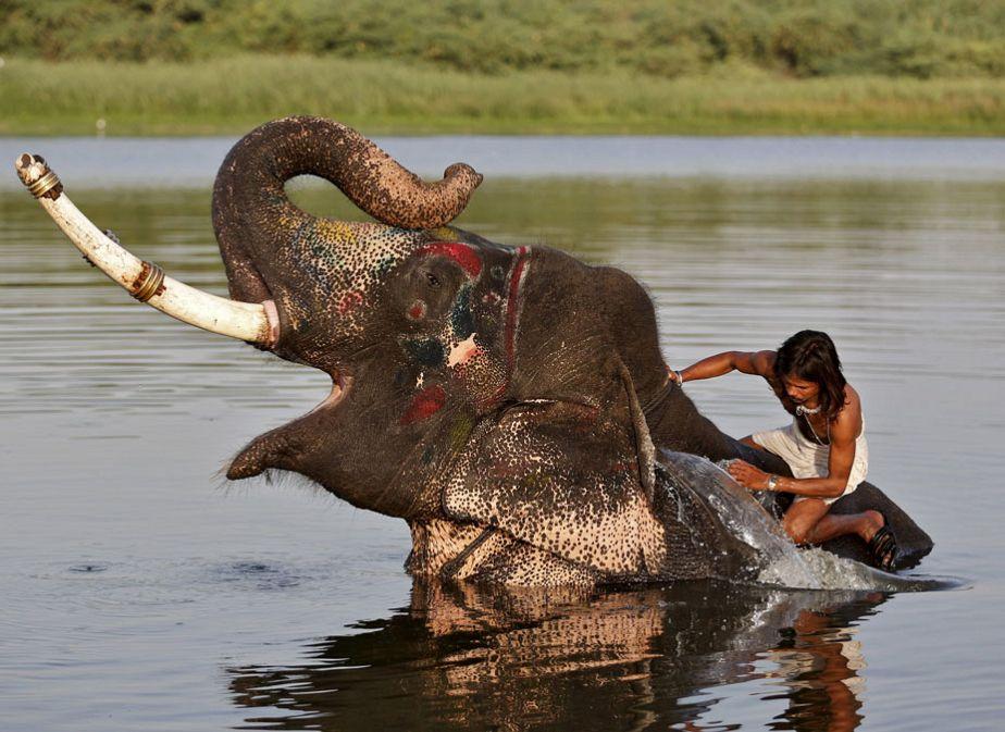 Le bain de l'éléphant