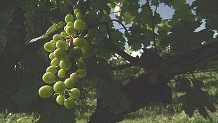 Há quantos anos se produz vinho na Geórgia?