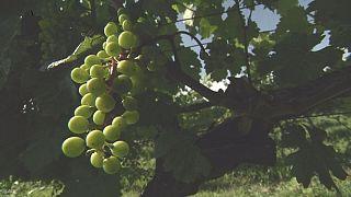 گرجستان؛ زادگاه احتمالی شراب