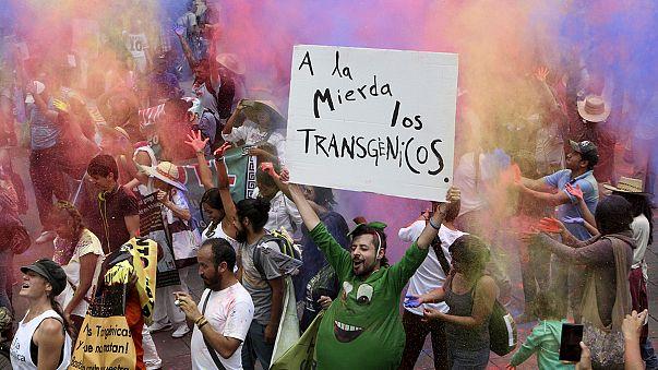 Génmódosított haszonnövények ellen tüntettek világszerte