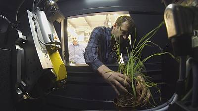 Root cause: making crop plants better at sourcing water and nutrients