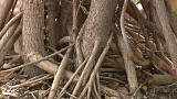 Do you know: roots or branches, which grow faster?