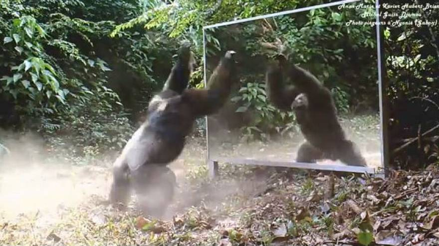 Vahşi hayvanların aynayla imtihanı