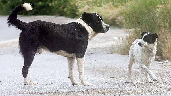 Δράμα: Χίλια ευρώ αμοιβή για τον δολοφόνο αδέσποτων σκύλων