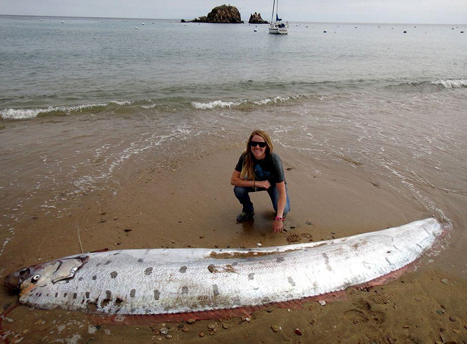 Rarissime :  un régalec échoué sur une plage américaine
