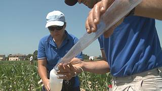 Helping farms produce more crops with less water