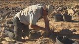 ¿Cómo nació la agricultura?